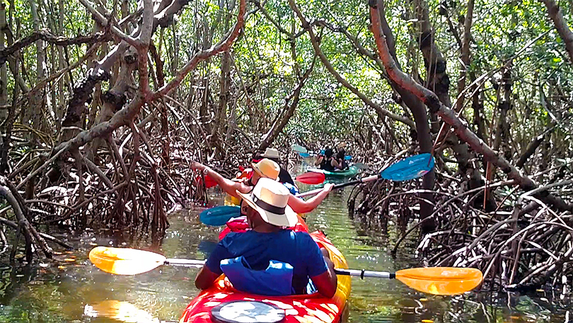 Island Kayak Tours Nature Ecotour Mangrove tunnel